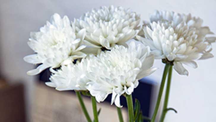 安くて長持ち、見た目もかわいい「菊の花」