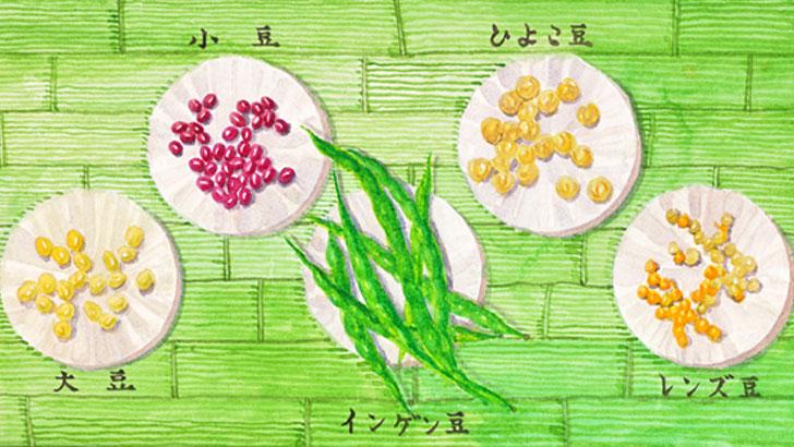 栄養豊富でクセがないサラダやスープで食べたい「ひよこ豆」