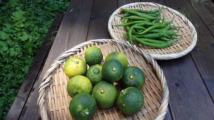 手づくり柚子胡椒の作り方~ご飯やおつまみのお供に常備
