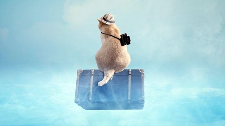 机上旅行~時刻表やパンフレットを広げて計画するおうち時間の楽しみ方