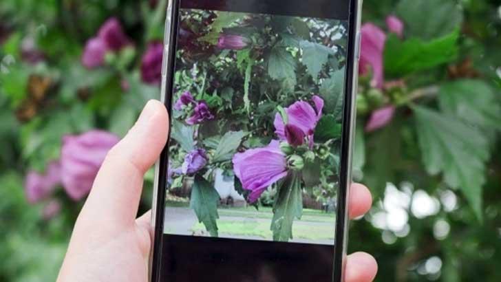 花の名前がすぐわかる植物図鑑アプリ2選