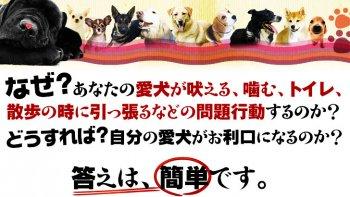 ダメ犬脱出、藤井聡の犬のしつけ方法