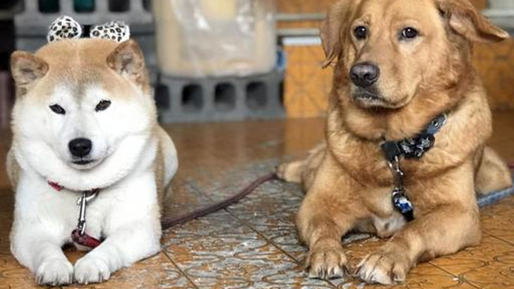 中型犬の特徴・飼い方・しつけ方