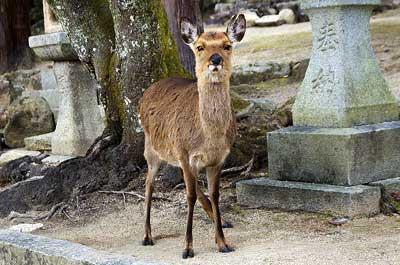 人なつこい鹿